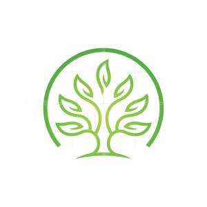 Green Tree Logo Circle Tree Logo