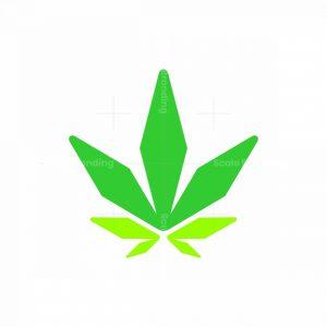 Modern Cannabis Logo