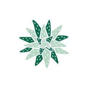 Star Aloe Logo