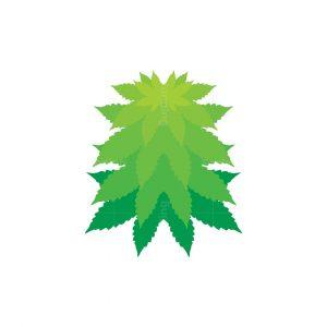 Cactus Cannabis Logo