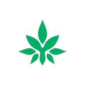 Stylish Y Cannabis Logo