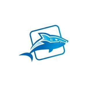 Shark Box Logo
